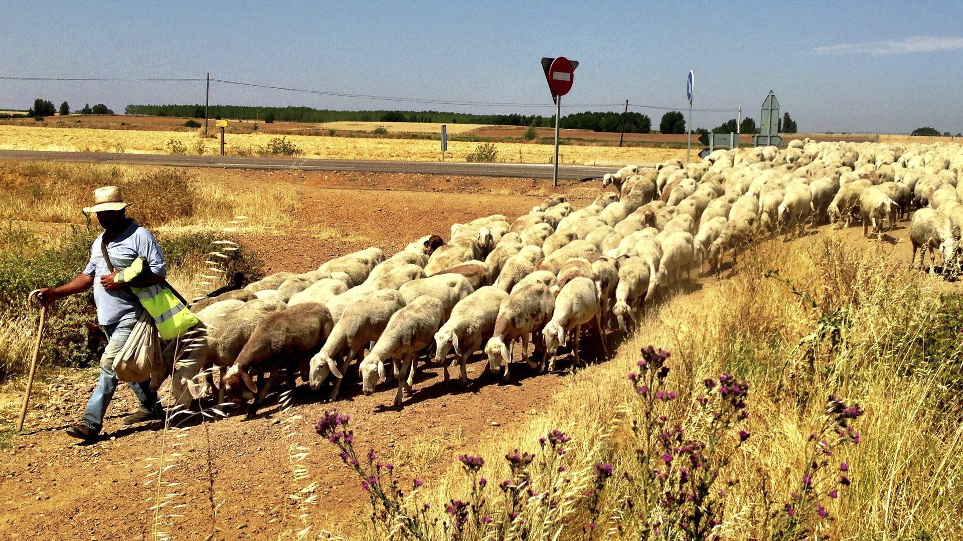 Traffic Jam on the Camino